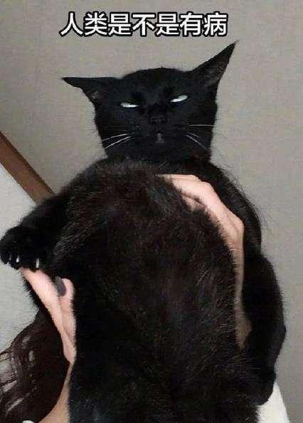 钢铁直猫是什么?钢铁直猫表情包大图分享